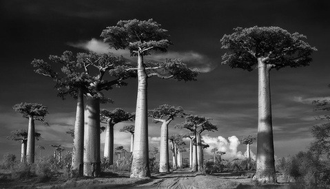 Photographer Beth Moon Spends 14 Years Photographing the World's Oldest Trees