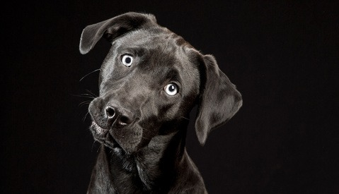 These Black Dogs Will Make Your Eyes Light Up With Glee