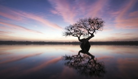 Mac Stone Discusses His Conservation Photography at the Everglades