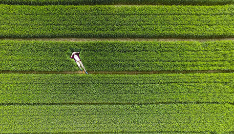 The Best of Drone Photography in 2015