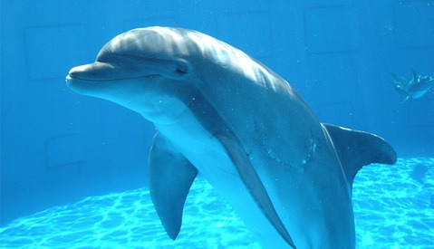 People Killed a Rare Baby Dolphin for Selfies
