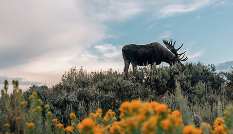 VSCO Launches Limited Edition World Wildlife Fund Preset
