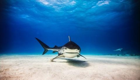Michael Muller Photographs Great White Sharks in Medium Format for 'Into the Shark's Eye'