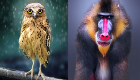 Mauritian Photographer Shamma Esoof With Her Astonishing, Sad Owl Portraits [Interview]