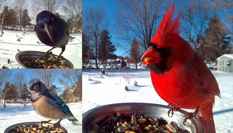 Bird Photography Technology Makes Great Images Possible