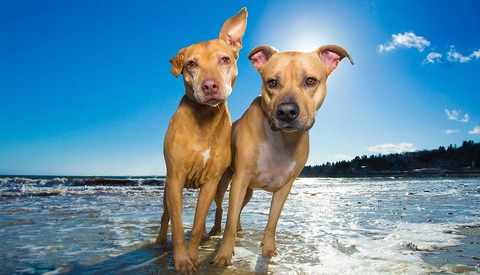 two dogs standing in the surf at the beach on a sunny day