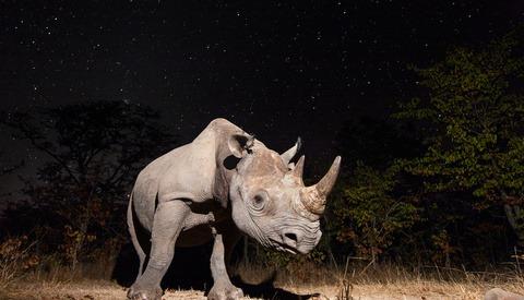 Capturing Elusive Animals With Camera Trap Wildlife Photography