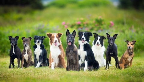 nine dogs in grassy field