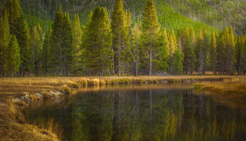 How a National Park Changed the Way I Shoot: Lessons From Yellowstone (Part 2)
