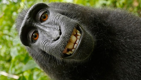 Settlement Reached in the Case Between Photographer and Narcissistic Macaque