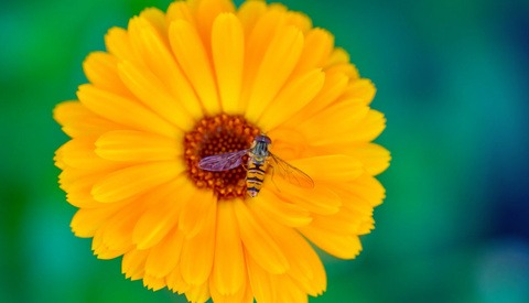 This Helpful Video Shares 10 Macro Photography Tips for Beginners