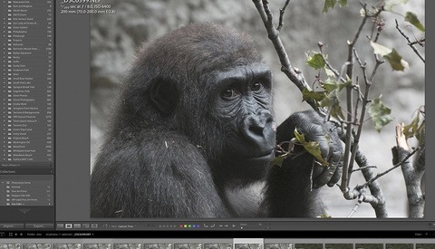 A Quick and Helpful Tip for Organizing Images in Lightroom