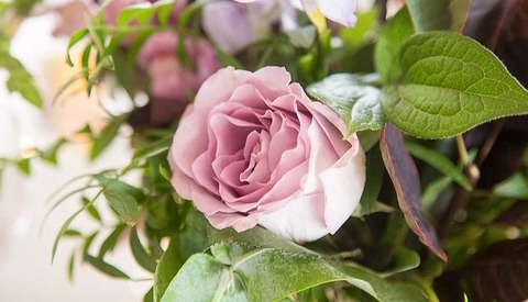pink rose in wedding bouquet