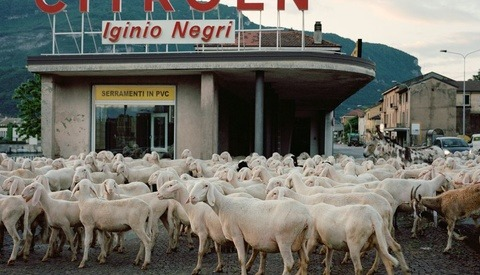 Urban Shepherds and Medium-Format Film: The Photography of Stefano Carnelli