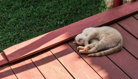 Owner of Viral 'Grumpy Cat' Wins $700,000 in Lawsuit