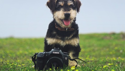 Canon: Top Dog or Underdog?
