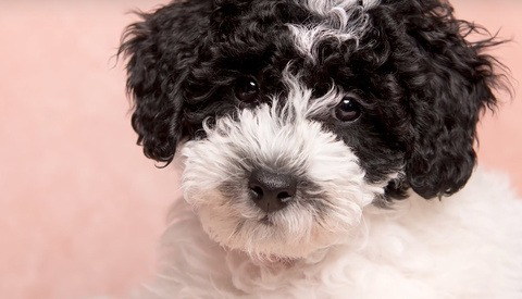 New Puppy in the House? Time to Put Together an Easy, In-Home Photoshoot
