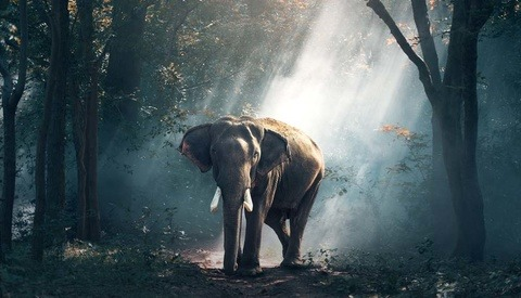 Photographer Pulls Elephant Skin Bags From Retail After Public Backlash