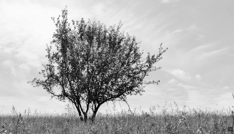 Learning to See in Black and White: When You Should Use It in Your Photos