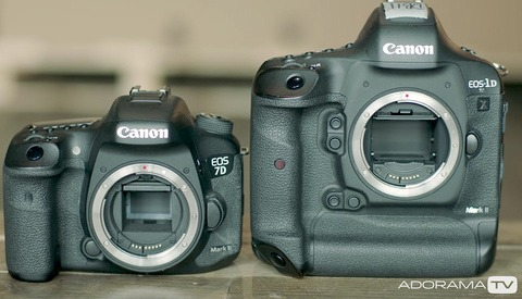 A Quick Beginner's Guide to Crop Versus Full-Frame Cameras