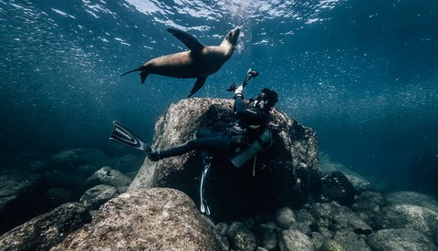 What to Expect When Photographing Sea Lions Underwater
