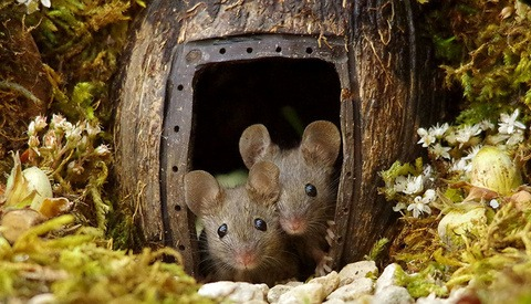 Photographer Documents Mice Living in his Garden After Constructing Miniature Home and Playground