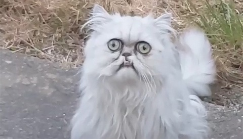 Did Instagram Censor a Parody Video Because of Cat Shaming?