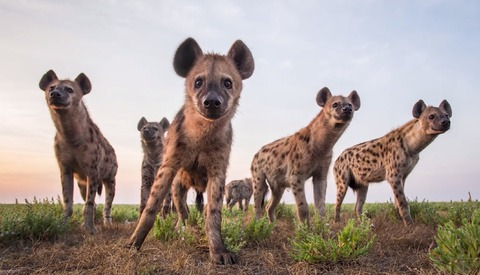 How to Photograph Dangerous Animals up Close Without Getting Killed