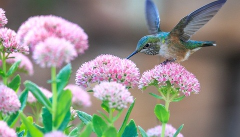 Photograph Wild Birds With Simon Roy
