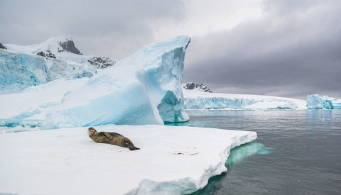 Wildlife Photographer Spends Two Weeks in Antarctica to Test Capability of Nikon Z 7 and D5
