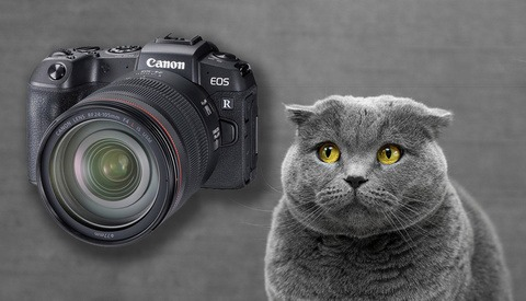 Canon's Dramatic Drop in Sales is a Sign of Something Much More Ominous for Photographers