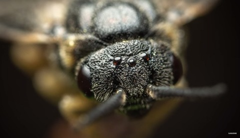 Insane Closeups: A Review of the Laowa 25mm f/2.8 2.5-5X Ultra Macro Lens