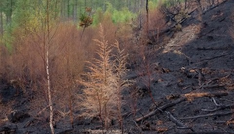 Photographing the Aftermath of a Forest Fire