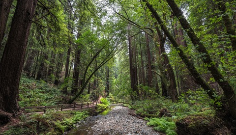 Stranded in the Forest? Simple Tips for Photographing Nature Safely