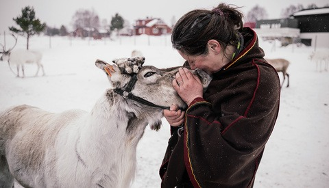 Into the Wild With the Reindeer of Norway and Sami Culture