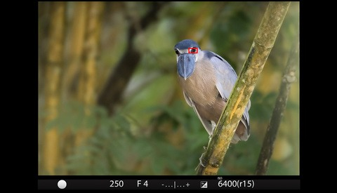 Perfect Autofocus for Wildlife in Difficult Shooting Environments