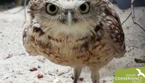 These Owls Have Had Enough of This Camera