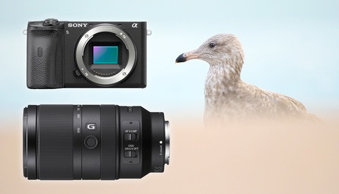 Sony a6600 and E 70-350mm f/4.5-6.3 G OSS First Impressions From a Bird Photographer