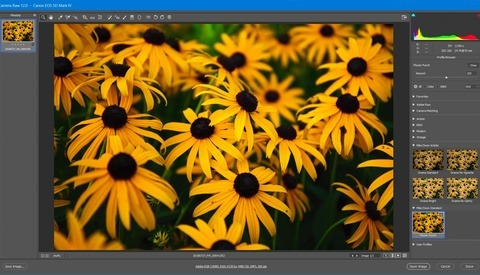 5 Secrets to Converting Presets to Profiles in Lightroom and ACR