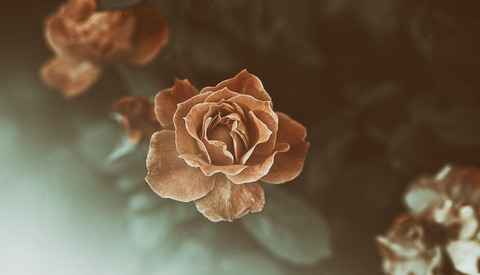 Finding Calm Photographing Gloomy Minimalist Flowers