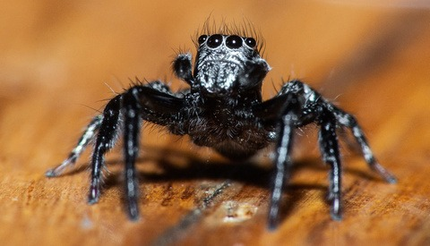 Macro Photography: What You Need to Know for Photographing the Smallest Creatures