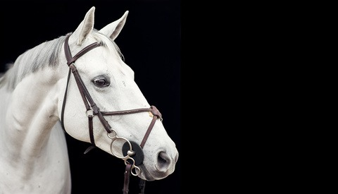 10 Tips for Better Photos With Horses