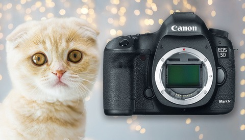 There Will Be No Canon 5D Mark V, and Photographers Will Lose out as a Result