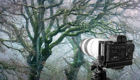 This Editing Trick Might Change How You Photograph Forests