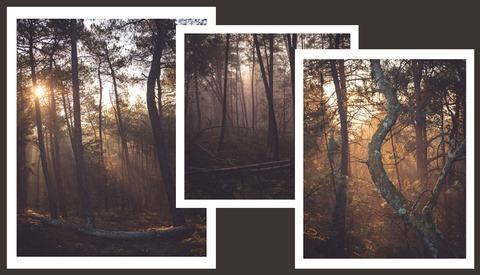 12 Ways To Turn Boring Woodlands Into Magical Photographs
