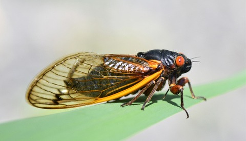 Photographers Should Put This on Their Calendar Right Now: The Brood X Cicada Storm in Eastern U.S.