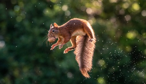 Wildlife Photographer Brings Joy by Documenting Jumping Squirrels