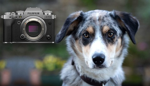 7 Tips and Tricks for Better Pet Portraits at Home
