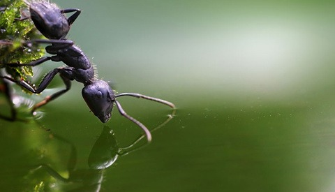 Outstanding Macro Photos of Insects and Snails