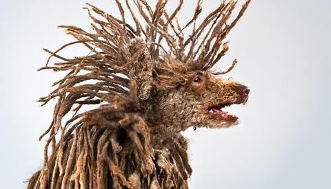 Carli Davidson's Spectacular Pet Portraiture